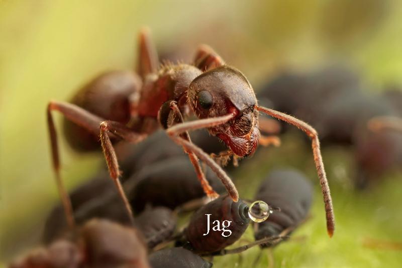 jag_lusen_blogg