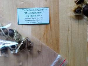 Moringa / pepparotsträd