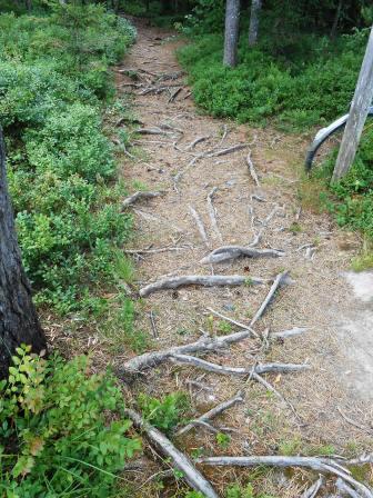 skogsvägen2