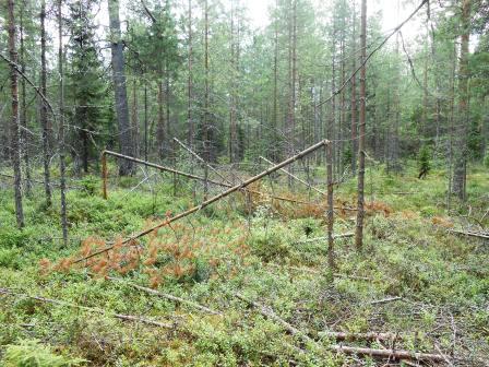 skogsvägen3