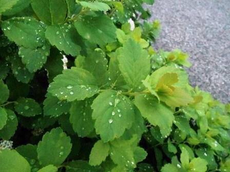 regndroppar3