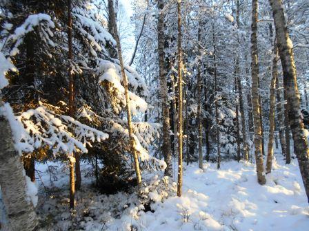 vinterbilder5