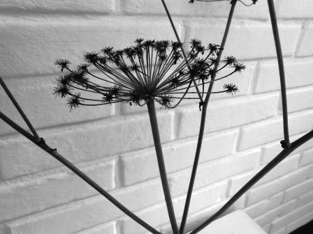 svartvitt3