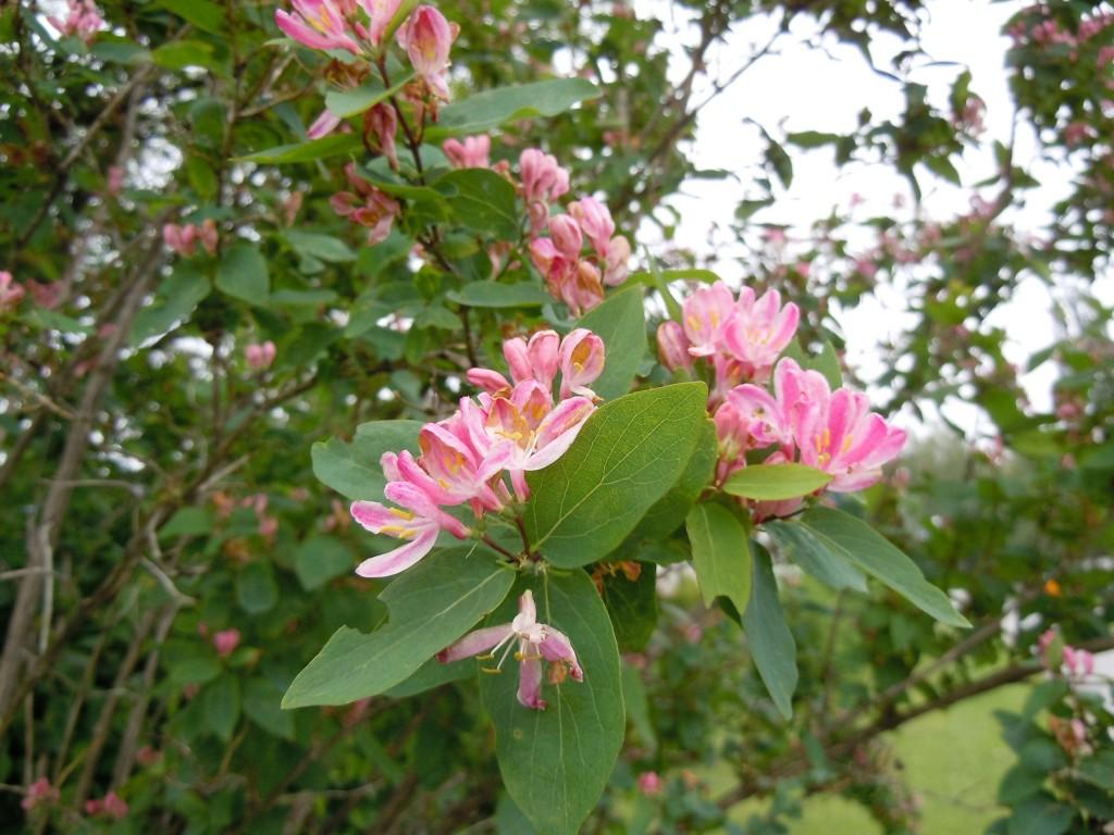 rosentry2