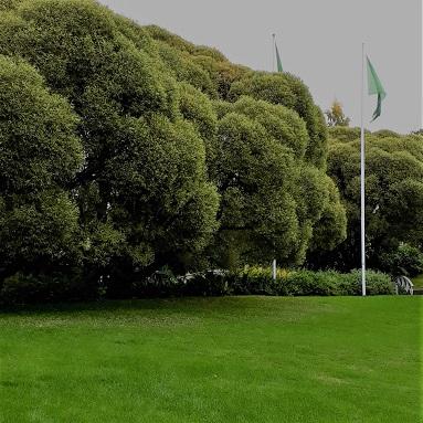 parken4