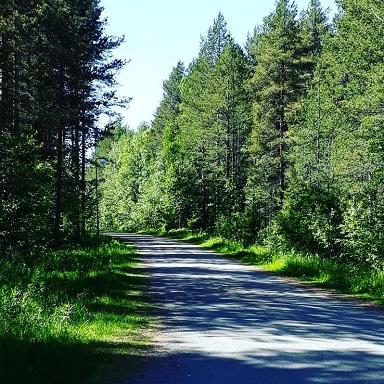 skogsvagen