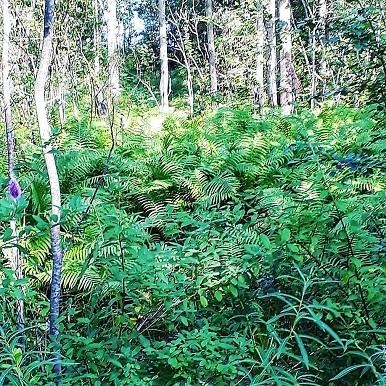 skogen9