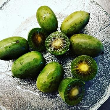 kiwibar