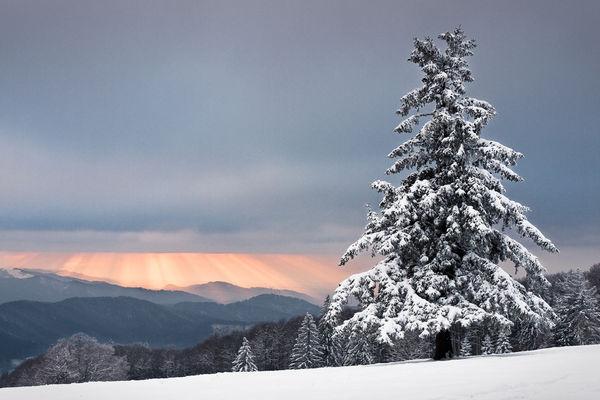 Frostbrutet Fjäll