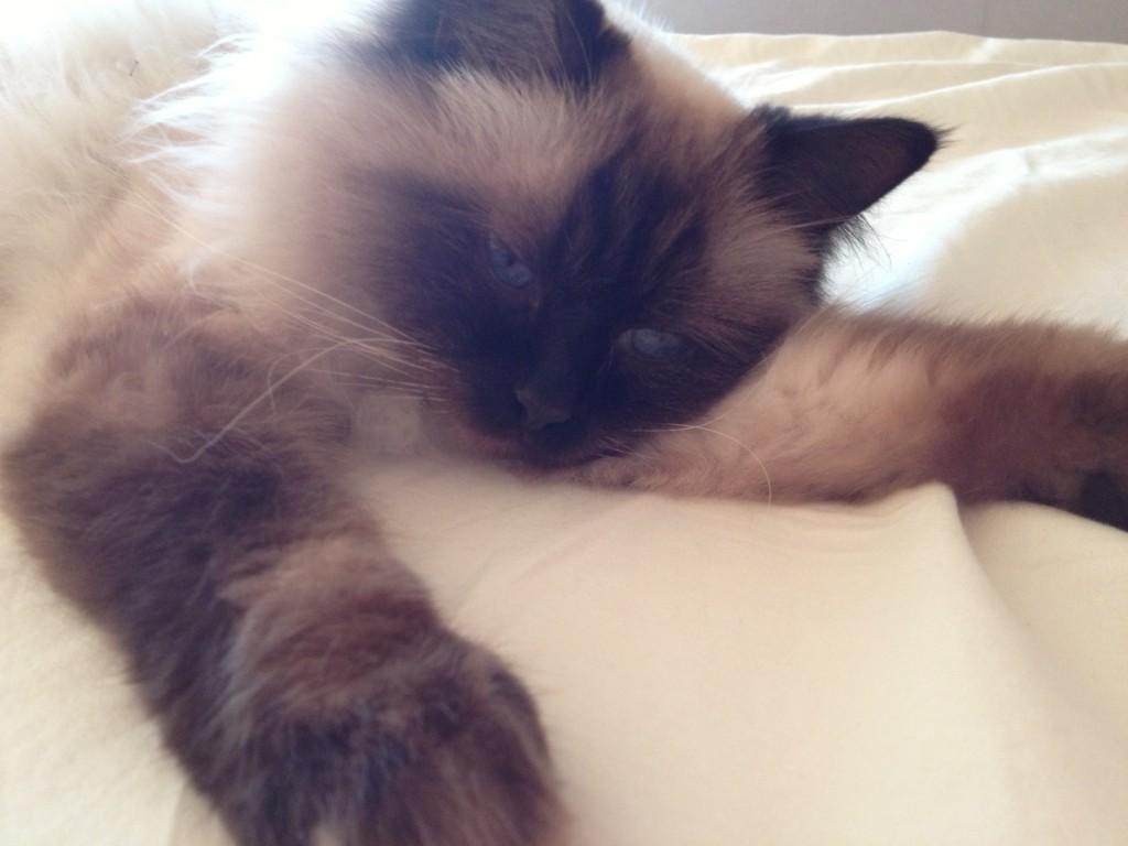 Katten... Numera runt 06-tiden, trött och utslagen :-)