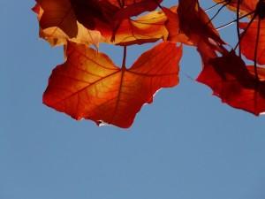 löv i trädet