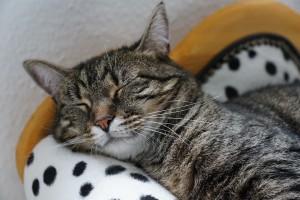 cat-2360876_960_720
