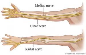 nervus-medianus_68483144