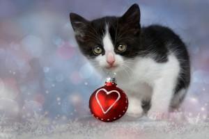 kitten-1856133_960_720