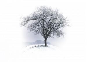 tree-530324_960_720