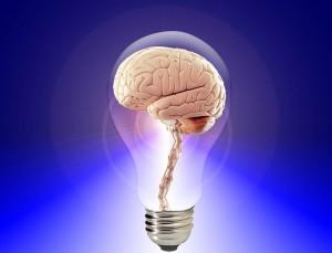 brain-20424_960_720
