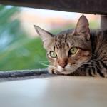 cat-4269479_960_720