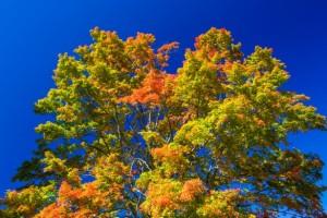 autumn-tree-crown-15682853139De