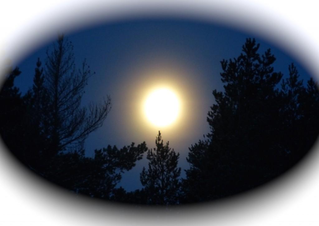 Måne halo 2 18