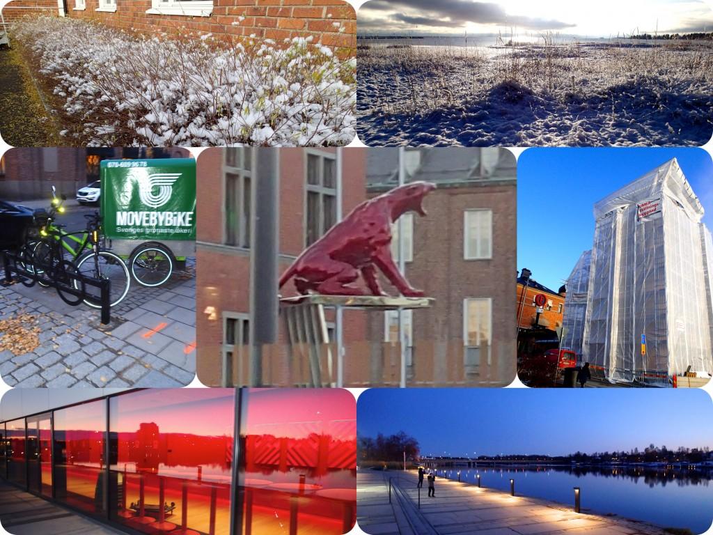 Umeåkonst med puma
