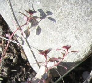IMG_9222.jpg.växt med skugga