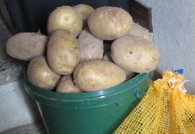 IMG_4124.jpg.potatis