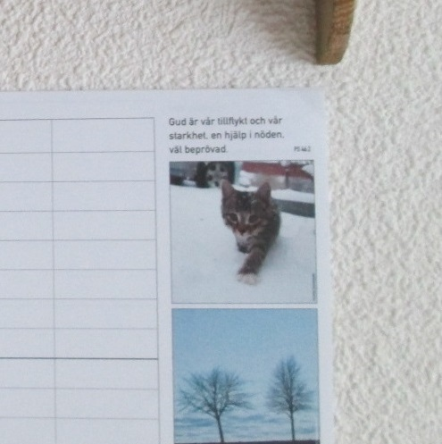 IMG_5388.jpg.katt
