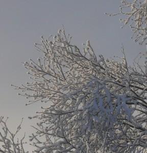 P1030378.jpg.vinter