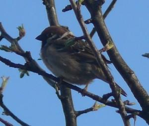 P1030486.jpg.fågel