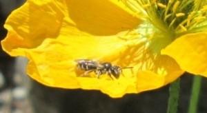 IMG_3435.jpg.insekt