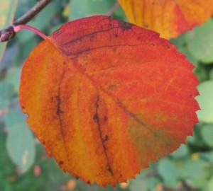 IMG_9353.jpg.löv
