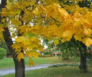 IMG_9825.jpg.träd
