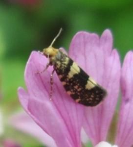 IMG_3774.jpg.insekt