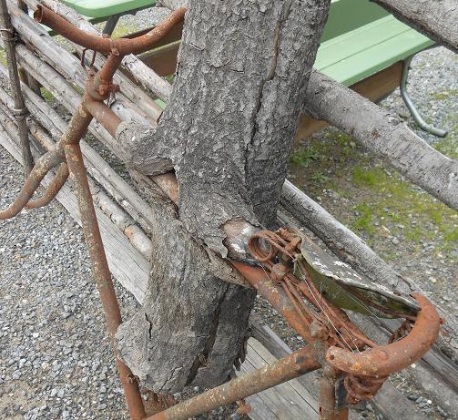 cykel o trad
