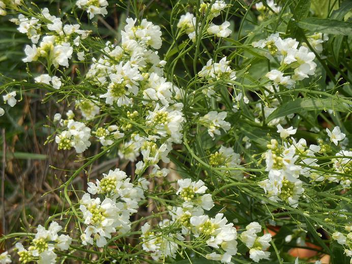 vita blommor2