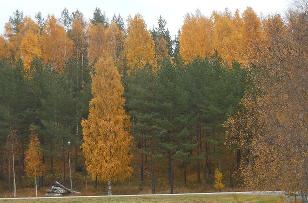 syksyinen metsa