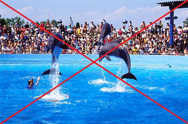 delfiner i fangenskap