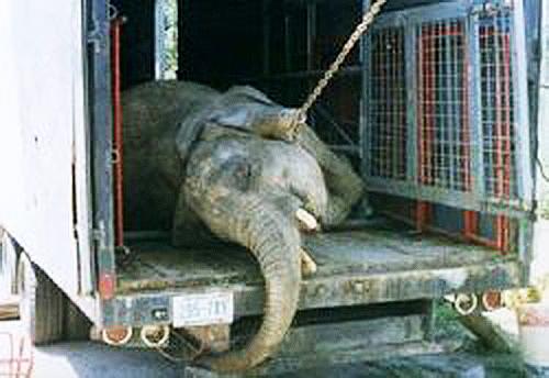 djur på cirkus argument