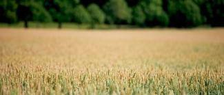 Priset stiger  på åkermark