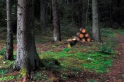 Stor skogsegendom får nya ägare
