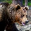 Björn nio  har skjutits