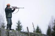 Allt färre utländska jägare jagar älg