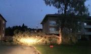 Stormbyar knäckte träd