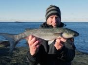 Rekord på helt ny art i Sverige