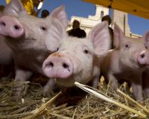 Antibiotika i matproduktionen - varför är problemet så svårt att förstå?