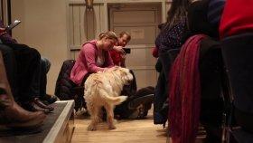 Gatuhunden Arthur älskar svenssonlivet