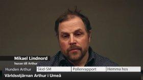 VK100: Världsstjärnan Arthur i Umeå