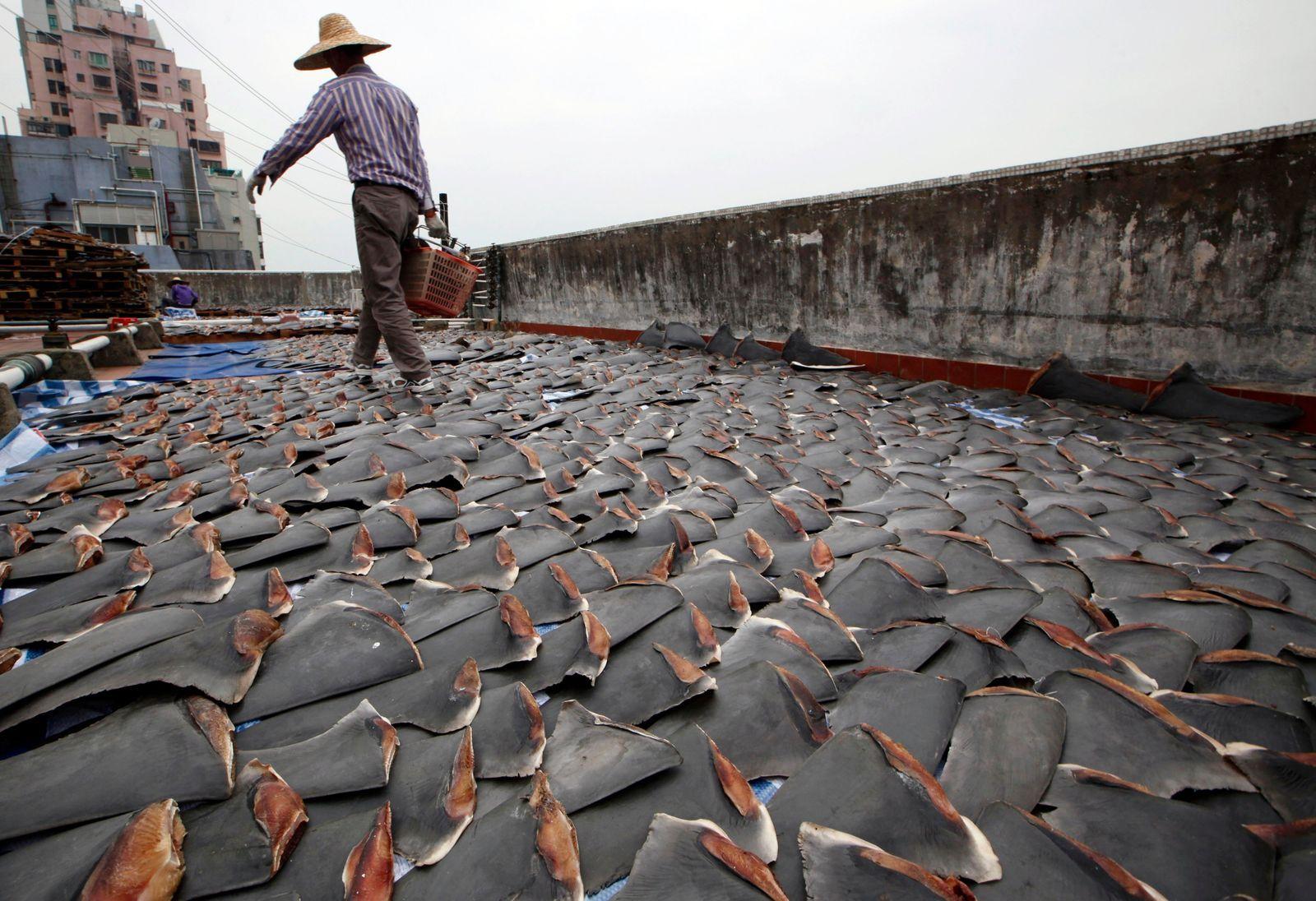 AP-อาหาร-จีน-หูฉลาม-สัตว์ทะเล-ตากแห้ง