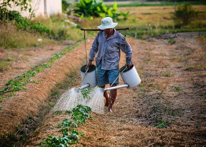 'อย่าลืมฉัน' เกษตรกรไทยหลังสู้แล้ง หน้าสู้โรค !