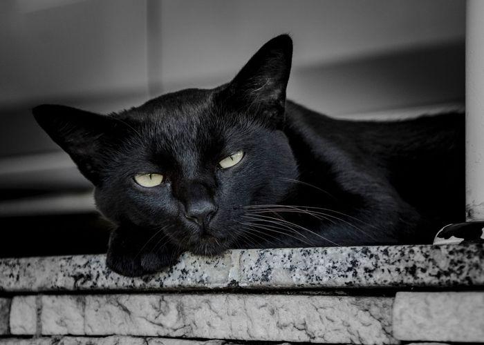 ย้อนความเชื่อแบบไทยๆ ใน 'วันแมวดำ' 17 ส.ค.